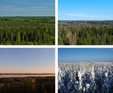 Four seasons of boreal forest. Photo by J. Aalto